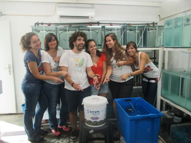 Congratulations to Marta Soares and her friends at CIBIO, a prestigious research lab from the University of Porto, who got 500 Euros from us to support their research with <i>Labroides dimidiatus</i>.