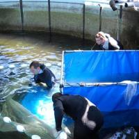 June 2009 June 2009 - Inside the holding tank, José Graça (Flying Sharks - right) and Mestre Alfredo (Tunipex - left) carefully seine lots of fish and restrain them inside a vinyl cage, from which they are then removed in plastic bags.