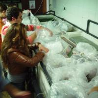 November 2011 Never did an acclimation procedure go so fast because, this time, João took his whole Aquaculture MSc class to help the boys unpacking the boxes freshly arrived from the Azores.
