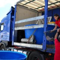 July 2011 Then Núria Baylina, and her amazing crew, came with the fish and loaded them up inside the tanks.