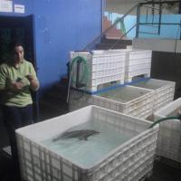 November 2011 After the animals were safely introduced to Zoomarine's quarantine tanks the team had a chance to chat with Isabel Gaspar, the aquarium's curator and a close friend of ours.