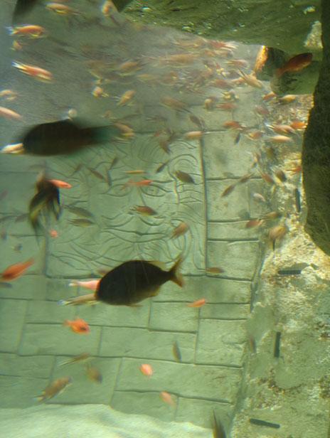 Aquarium Antwerp